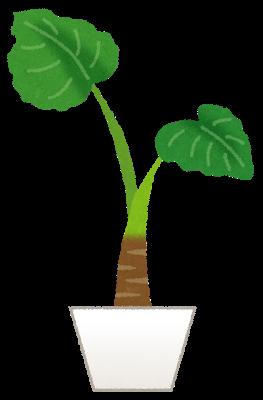 plant_kuwazuimo.png